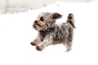 Specialist dog portraiture by Hairy Dog Photography